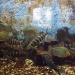 Südamerikanische Salmler (Aquarium Thüringer Zoopark)