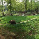 Braunbärenanlage (Tierpark Hexentanzplatz)
