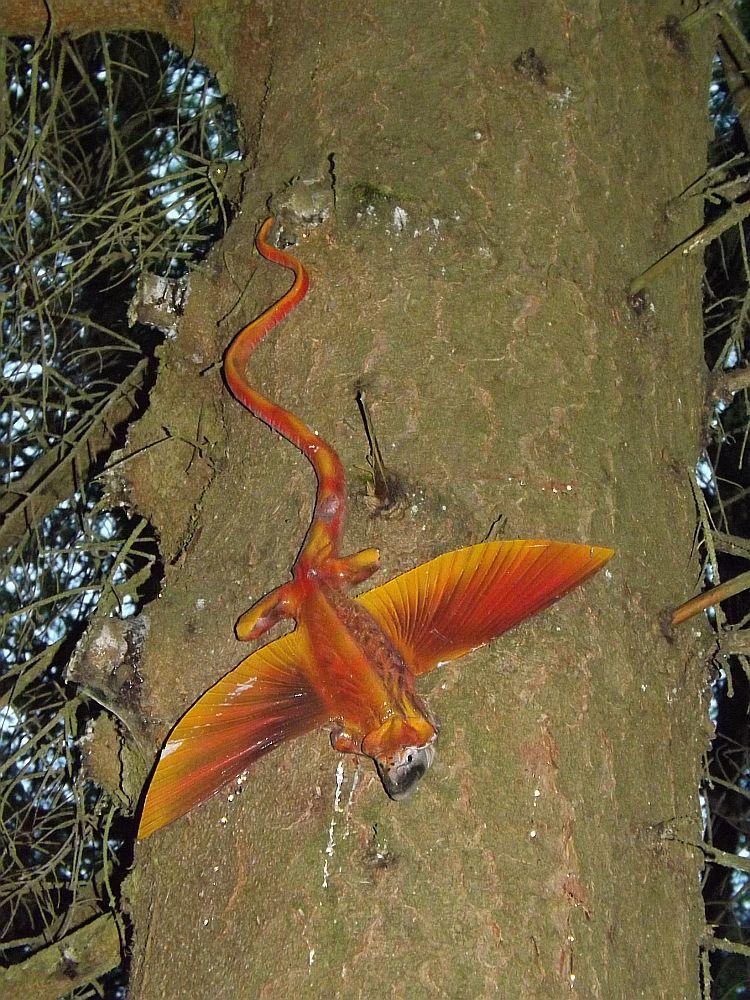 Coelurosauravus jaeckeli (Sauriererlebnispfad Georgenthal)