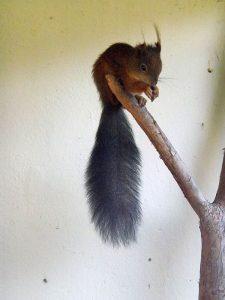 Eichhörnchen (Pfauengarten)