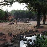 Giraffenanlage (Erlebniszoo Hannover)