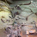 Nashornleguanterrarium (Tierpark Hellabrunn)