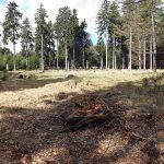 Rothirschanlage (Wildpark Mehlmeisel)