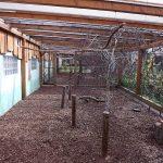 Begehbare Sittichanlage (Tiergarten Staßfurt)