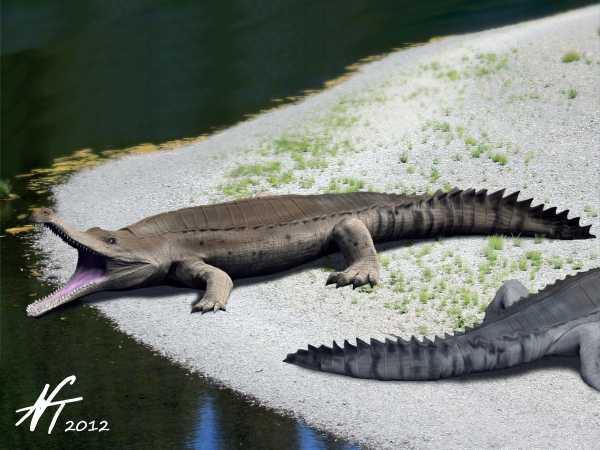 Sarcosuchus imperator (© N. Tamura)