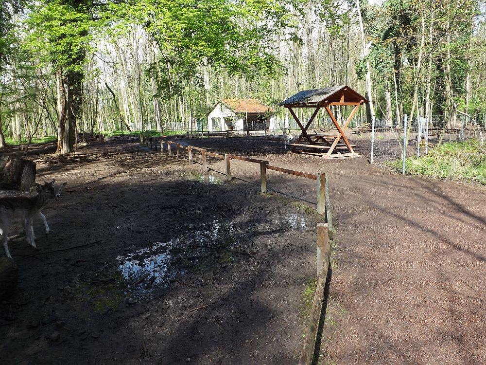 Begehbare Damhirschanlage (Tierpark Köthen)