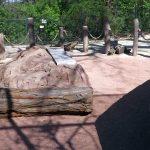 Löffelhundanlage (Zoo Halle)