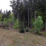 Luchsanlage (Nationalparkzentrum Falkenstein)