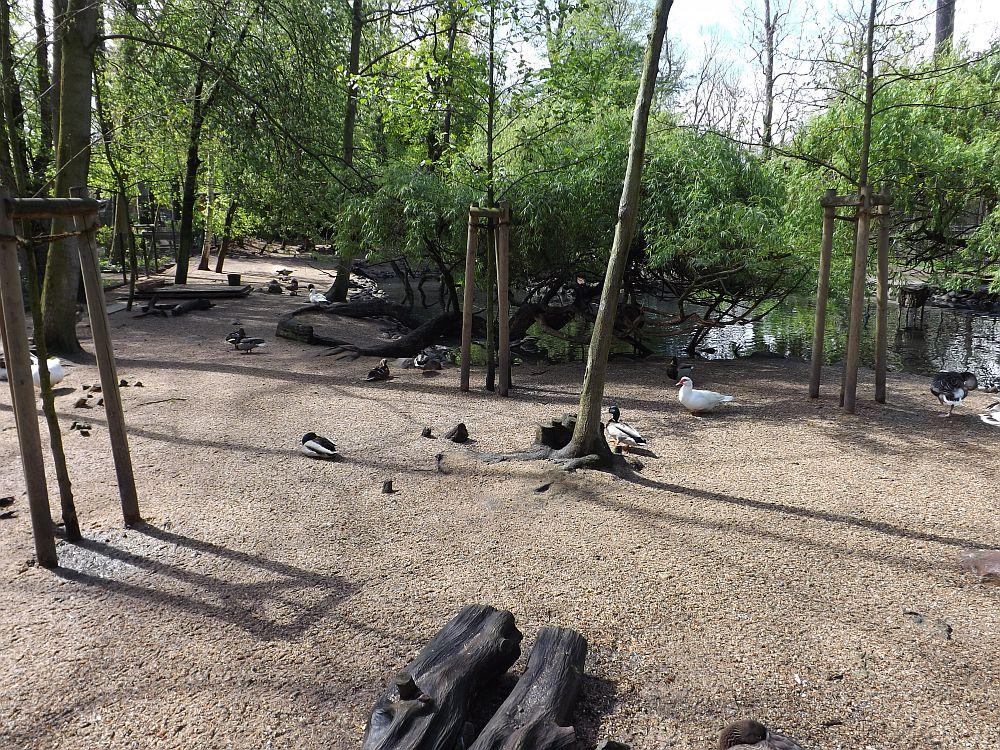 Ententeich (Tierpark Köthen)