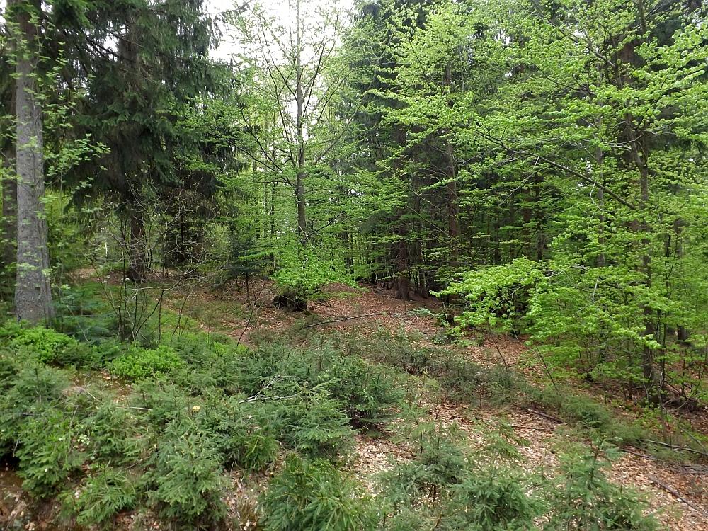 Wolfsanlage (Nationalparkzentrums Falkenstein)