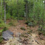Wolfsanlage (Nationalparkzentrum Falkenstein)